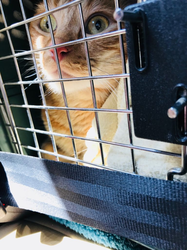 My cat Bailey in his carrier on the way to Mercy Animal Hospital in Fair Oaks