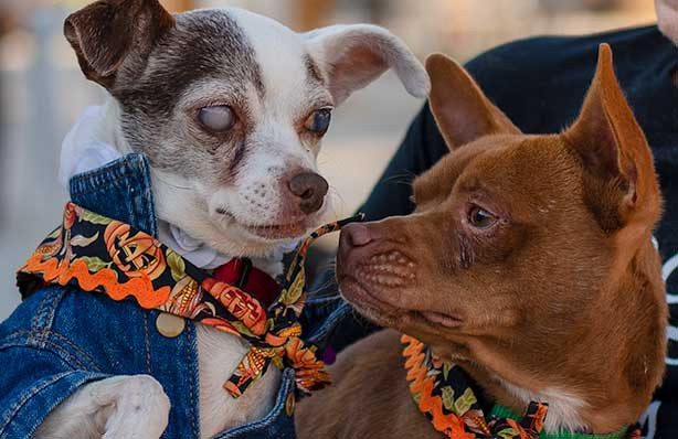 Halloween Yappy Hour Sacramento 2020 Puttin on the Dog for Yappy Hour at Shangrila Fair Oaks – I Love