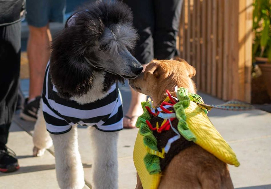 shangrila-fair-oaks-yappy-hour-front-street-animal-shelter-halloween-contest-2019-photo-by-chrysti-tovani-4339-low-res